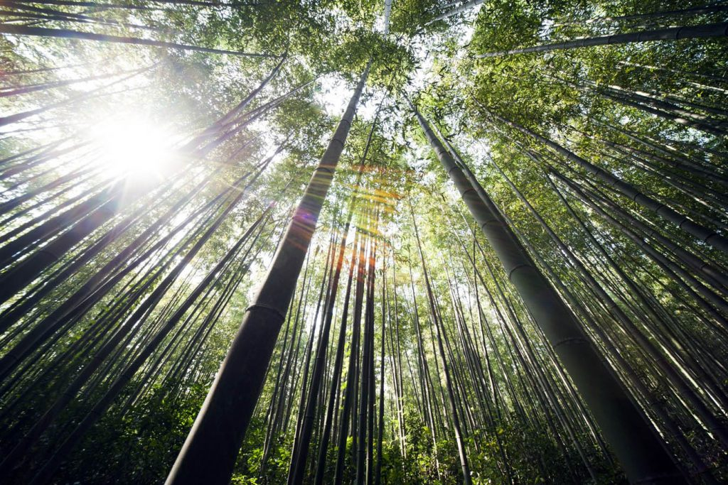 Sustainable and Eco-friendly Bamboo